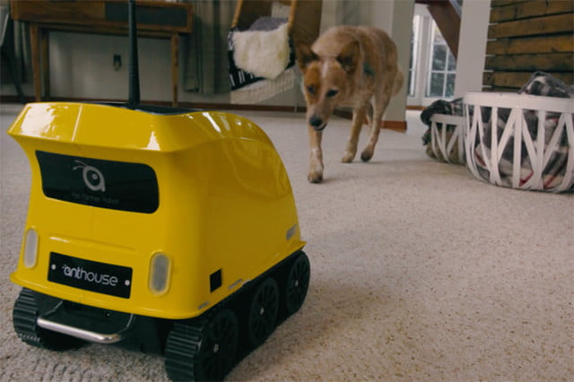 anthouse pet companion robot 4