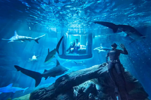 sleep underwater paris aquarium sharks airbnb de shark 002