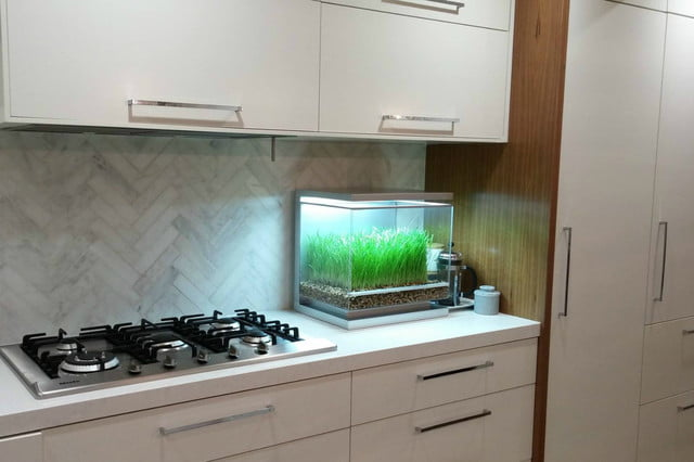 the biopod is a microhabitat thats rainforest on your countertop kickstarer