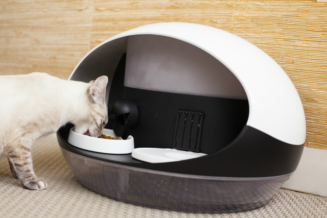 catspad is a smart food and water dispenser for cats cat feeder 2