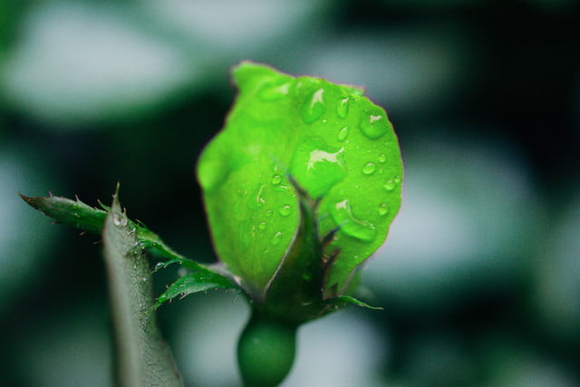photoshop change color of object dsc 1728 green