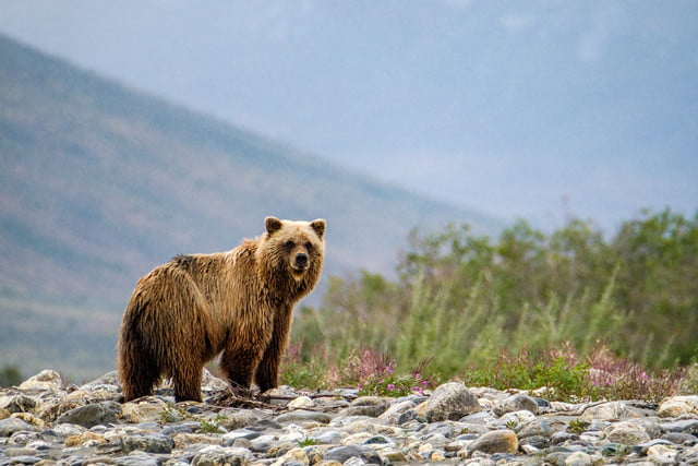 photographer jonathan irish national parks interview  gates of the arctic np fujifilm 5