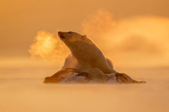 how to photograph the arctic with joshua holko interview svalbard 9725 edit