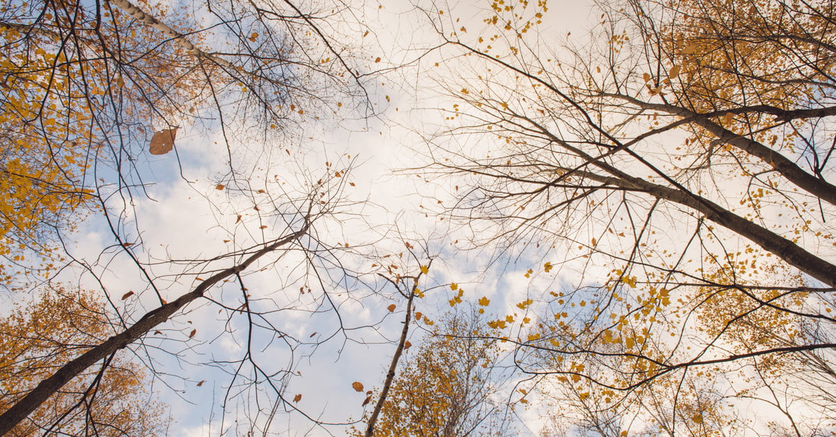 Leaf peeping: How to photograph fall's changing leaves