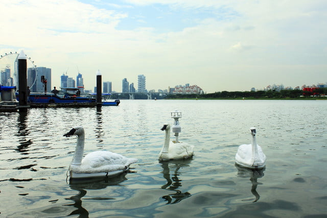 robot swan water quality
