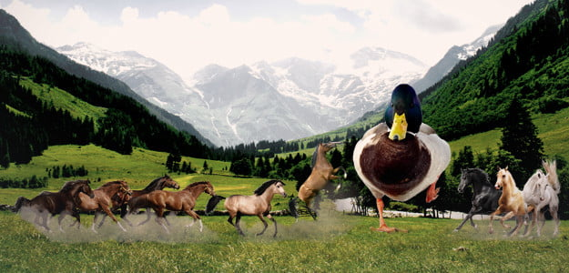 Fight 1 Horse Sized Duck Or 100 Duck Sized Horses Here S