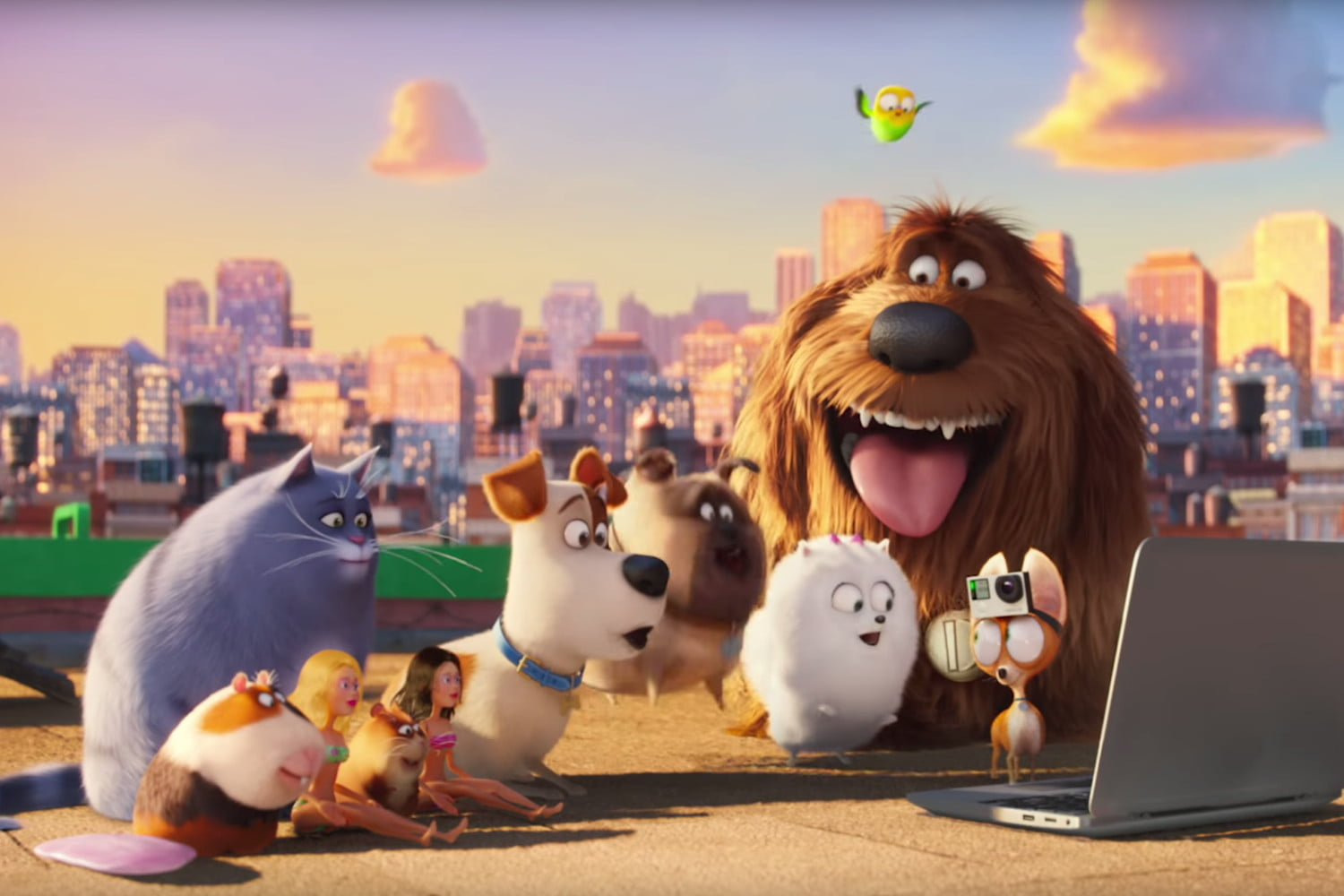 The Secret Life Of Pets 2016 My Thoughts Surfing The Sea