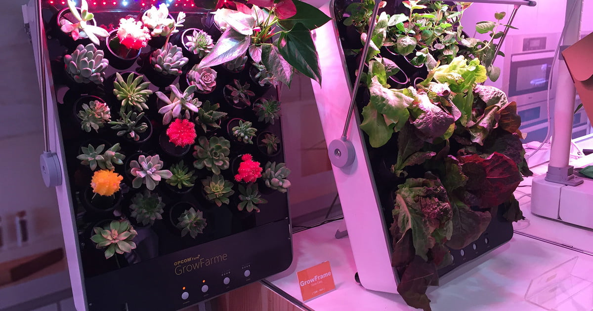 Have an indoor garden with smart solutions from opcomlink for Indoor gardening trends