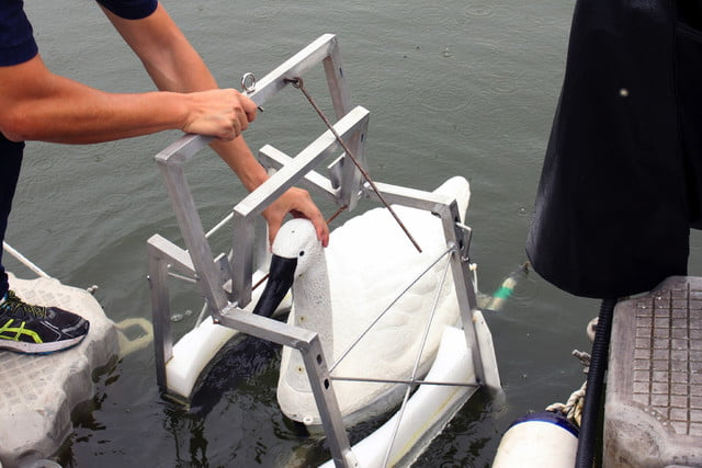 robot swan water quality img 9144