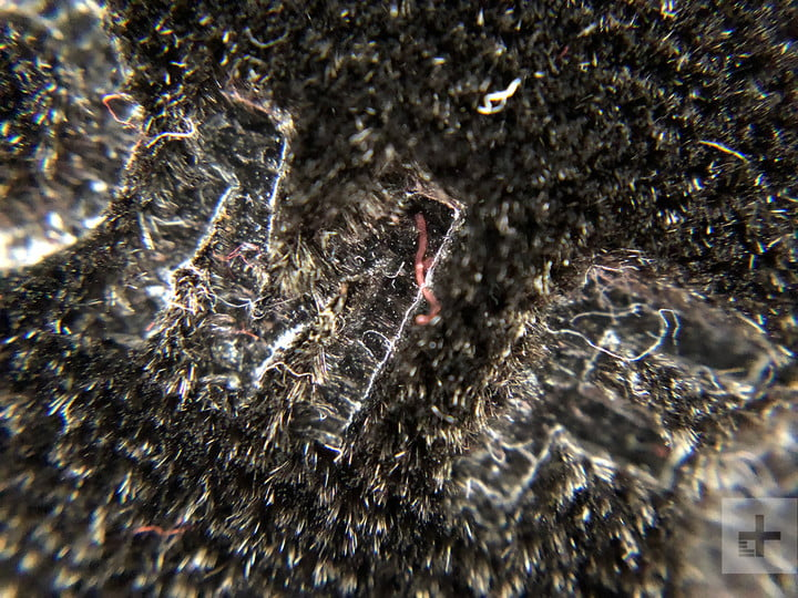 smartphone macro lens camera shootout tom ford olloclip
