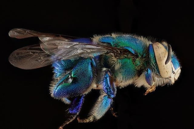 high resolution macro photos show amazing details bees wont cure fear bugs sam droge bee 12