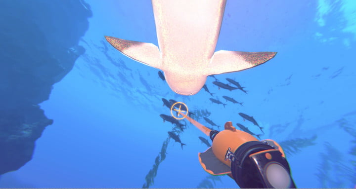 Swimming with sharks operation apex is influenced by your - Apex dive gear ...