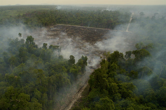 wildlife photographer of the year 2016 tim laman  photojournalist award story road to destruction